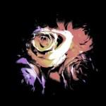 Brown / White Rose
